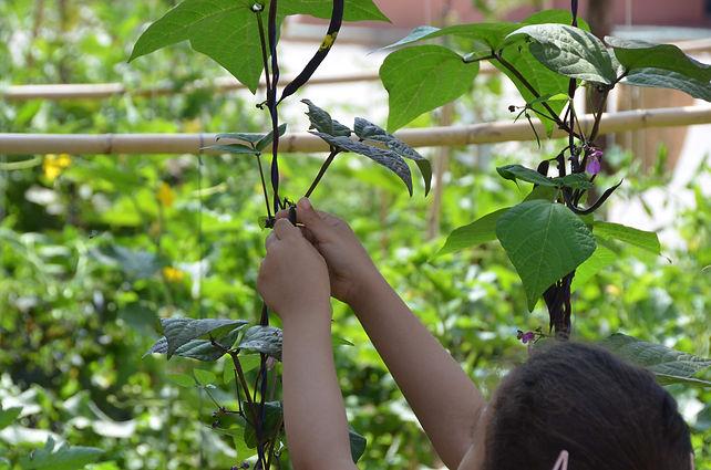 education permaculture, labellisation E3D programe EDD, jardin école, réalisation de jardin dans une école, autonomie alimentaire, fabien tournan, regeneration vegetale, regeneration des sols
