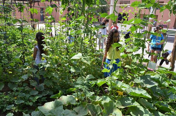 education permaculture, labellisation E3D programe EDD, jardin école, réalisation de jardin dans une école, autonomie alimentaire, fabien tournan, regeneration vegetaleation permaculture, labellisation E3D programe EDD, jardin école, réalisation de jardin dans une école