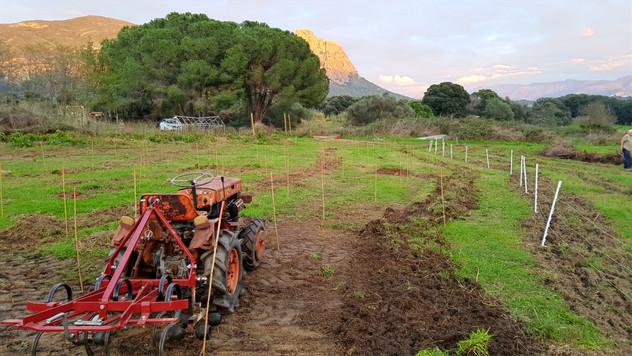 Griffage légé au tracteur pour retirer le chient-dent et semer nos engrais verts...