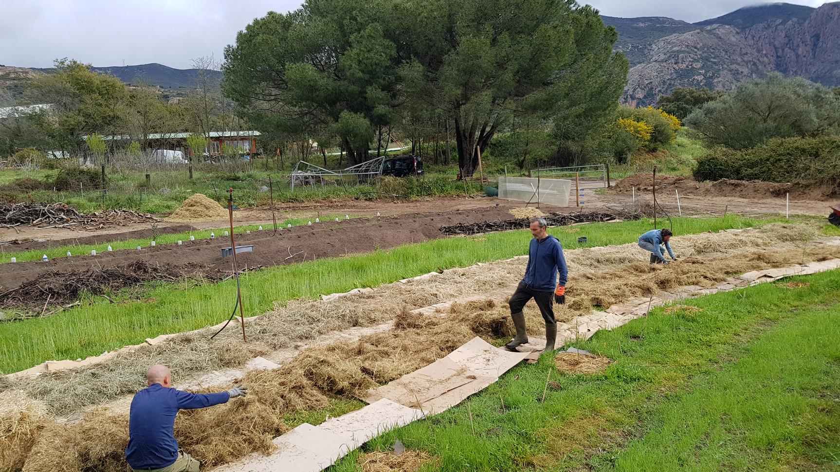 Installation de lit sous paille, zero travail du sol...