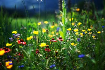 Home Herbalist Program