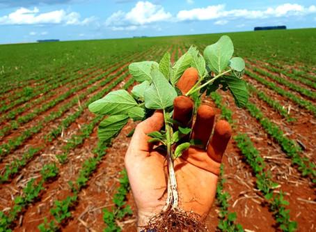 Os benefícios da co-inoculação de Azospirillum brasilense na cultura da soja
