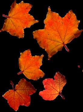 foglia-autunno-png.png