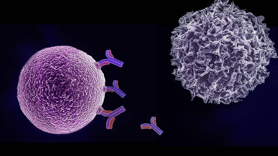 t-cells-1.jpg