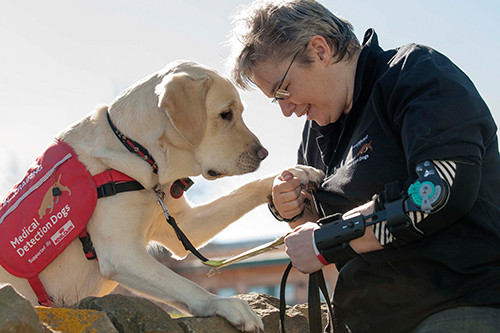 Medical Detection Dogs Help Diabetes Patients Regulate Blood Glucose Levels