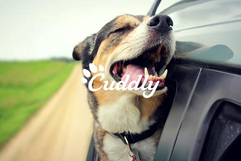 Cuddly Pet App