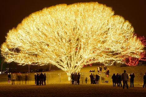 Celebration of Lights.jpg