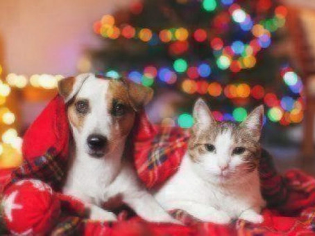 Why Are the Holidays So Hard While Grieving a Pet?