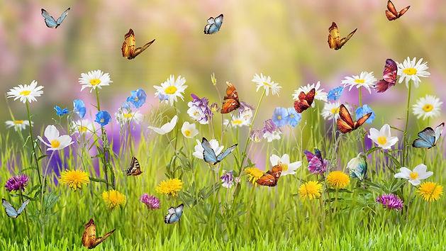Butterflies2.jpg