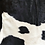 Thumbnail: Small black and white cow hide
