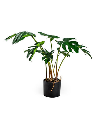 Faux Cheese Plant in Pot