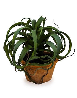 Curly faux Succulent Plant in terracotta Pot