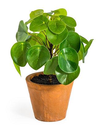 Faux Money Plant In Terracotta Pot