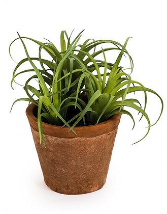 Ornamental faux succulent plant in terracotta pot
