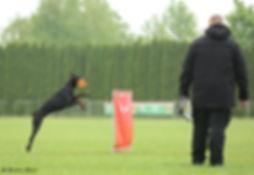 Ferro Jump IDC.jpg