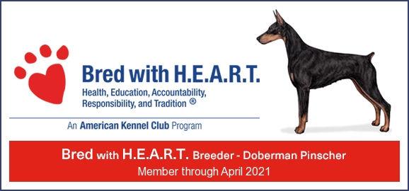 Heart banner 2021.jpg