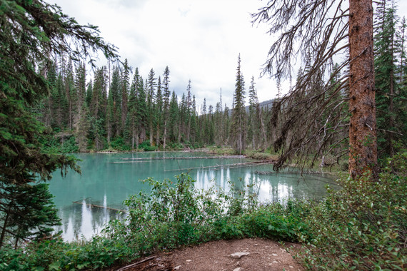 Emerald Lake surrounded by trees.