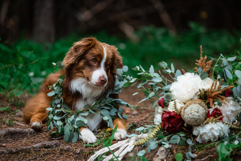 Couple's dog laying down beside the bride's bouquet.