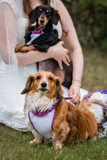 Bride with her  wiener dogs who are in wedding attire at Cascade ponds.