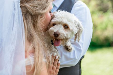 Bride kissing her dog being held by the groom.