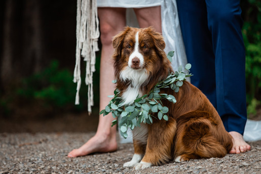 Bride and grooms dog. Dog is wearing a wreath necklace make of leaves. Bride and groom are barefoot.