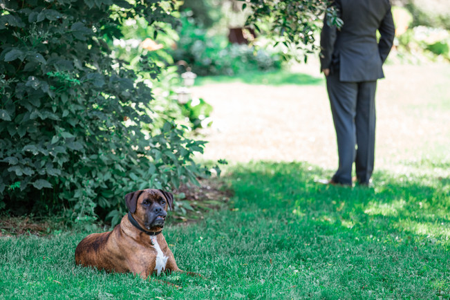 Groom standing off to the side and the couples dog laying in the grass.