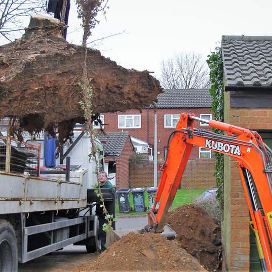lifting lorry removal of invasive tree Pinehurst Estate Hertford