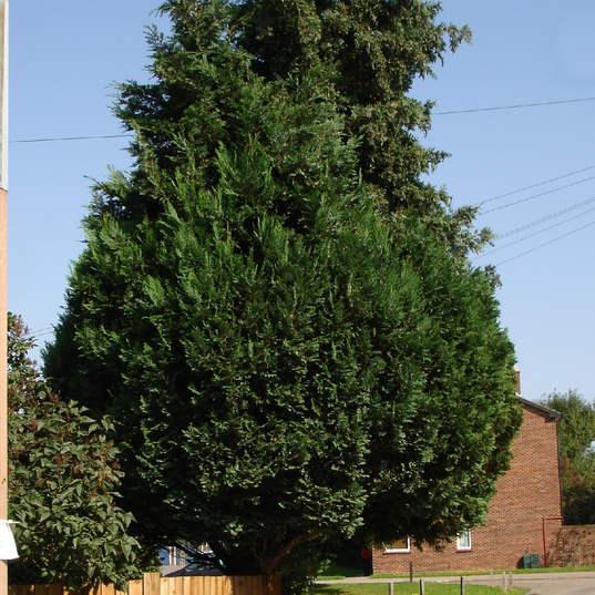 large trees need specialist tree surgeons