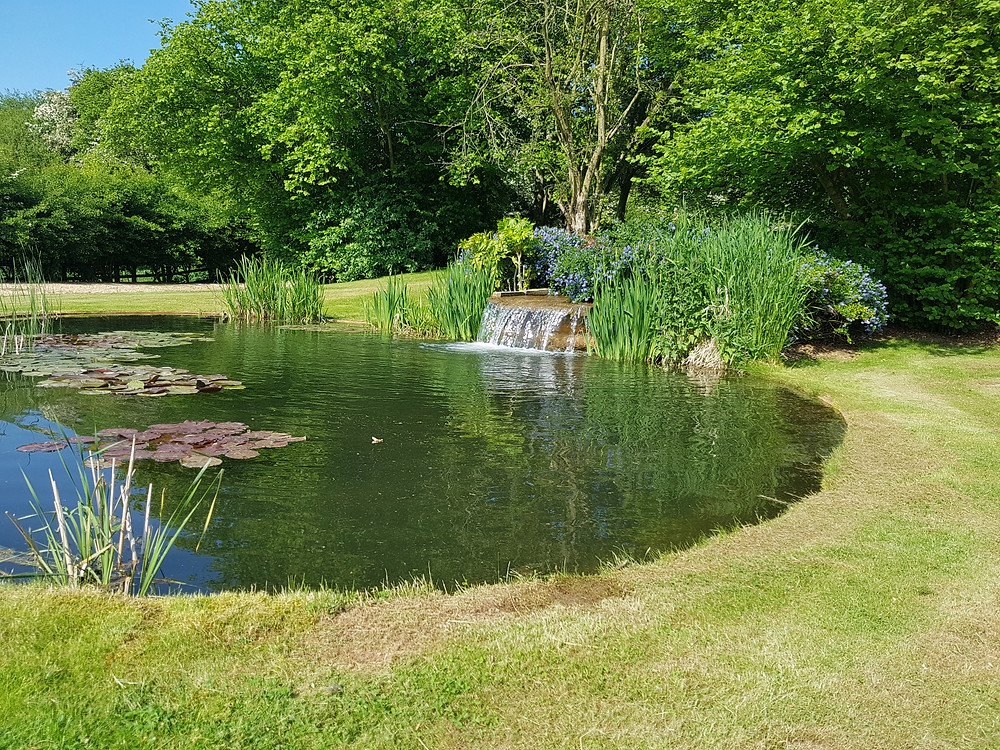Beautifully designed natural pool with waterfall. Choose the right garden designer for your project