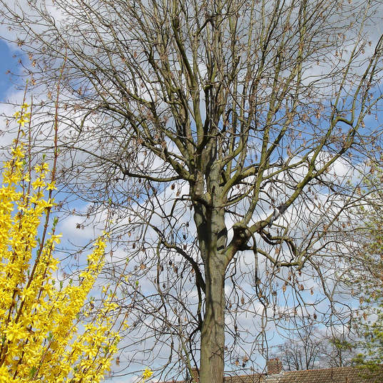 Large tree surveys and care