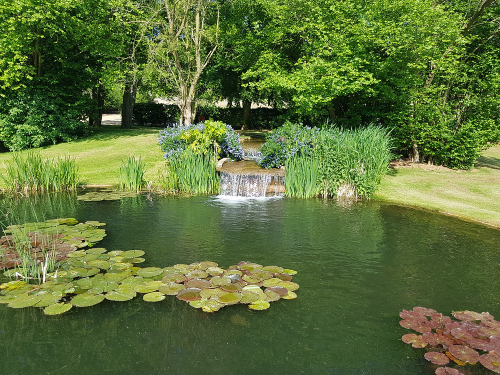small waterfall into carp pond with lily pads