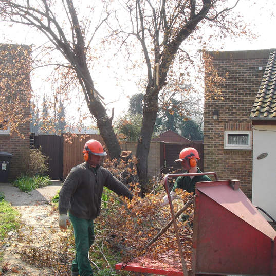 Dead tree felling and removal