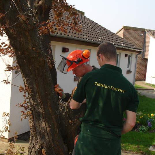 Tree investgation careful consideration and surveying