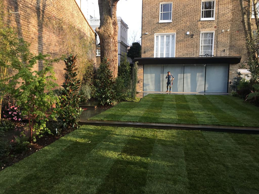 Beautifully mown lawn, the stipes echo the design of the bi-fold doors