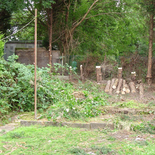 Tree felling and removal of stumps