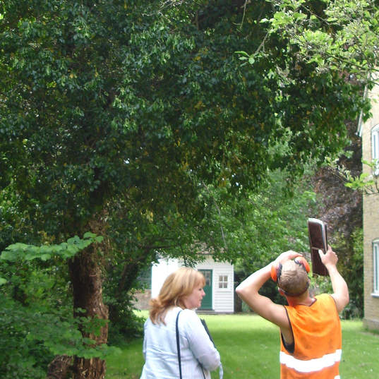 Tree survey and consultation