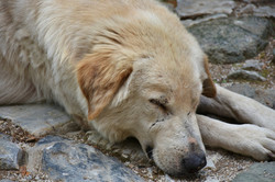 dog-2726879_1920