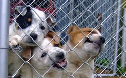 dog-1441396_1920