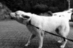 barking-1819740_1920.jpg