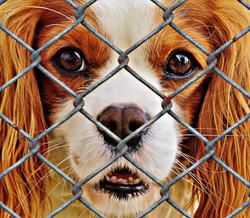 animal-welfare-1116184_1920