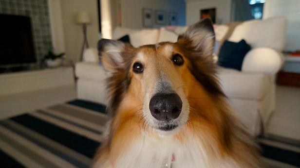 dog-705820_1920.jpg
