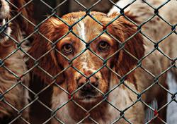 animal-welfare-1116205_1920