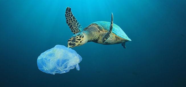 Plastic Polluted Ocean_edited.jpg
