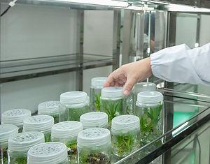 PlantTissueCult.jpg
