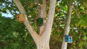 PROJETO   Casas/Ninhos para aves