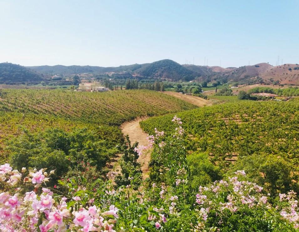 Algarvian Half Day Wine testing tour