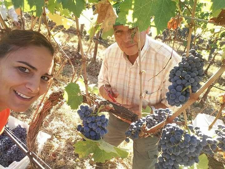 Algarvian Sunset Wine testing tour