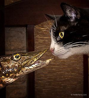 Профессиональный фотограф. Кошка, собака, домашние питомцы