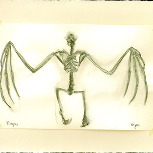 Pteropus Niger