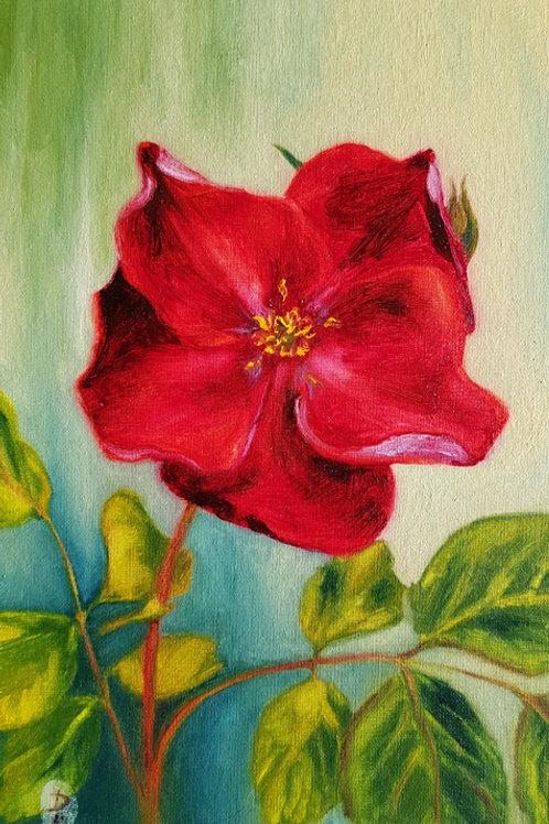 Red Tea Rose